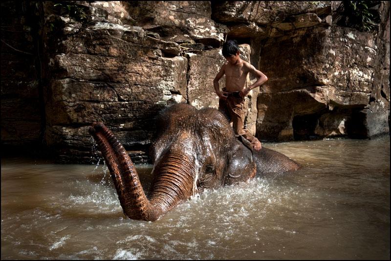 Elefante en retiro camboyano