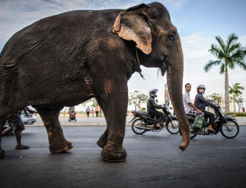 7 razones para reservar tu viaje a Camboya hoy