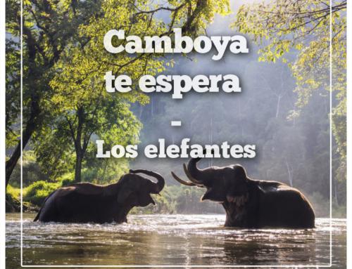 Elefantes en Camboya