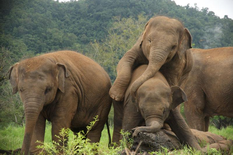 Santuario_elefantes_Camboya